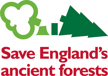 save englands ancient forests